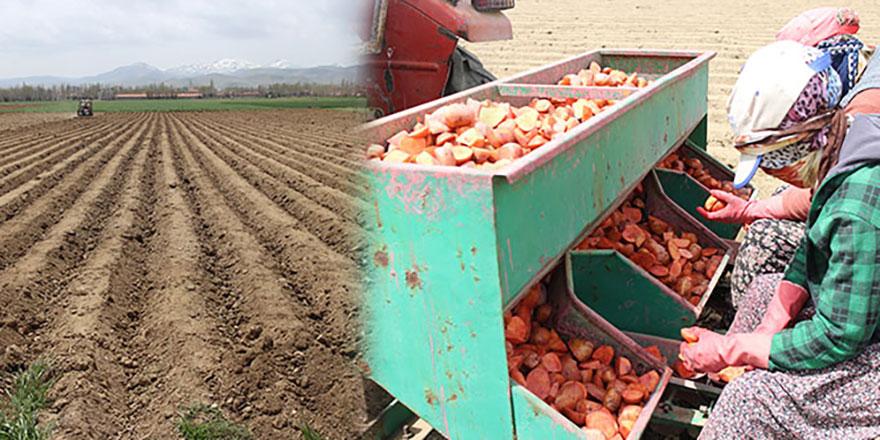 Patatesin fiyatlarında sevindiren haber