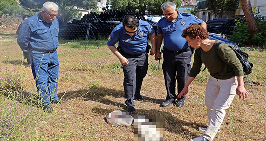 Antalya'da kedi katliamı yapıldı