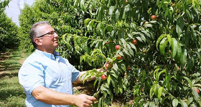 İnşaat sektöründen ayrıldı, nektarin bahçesi kurdu
