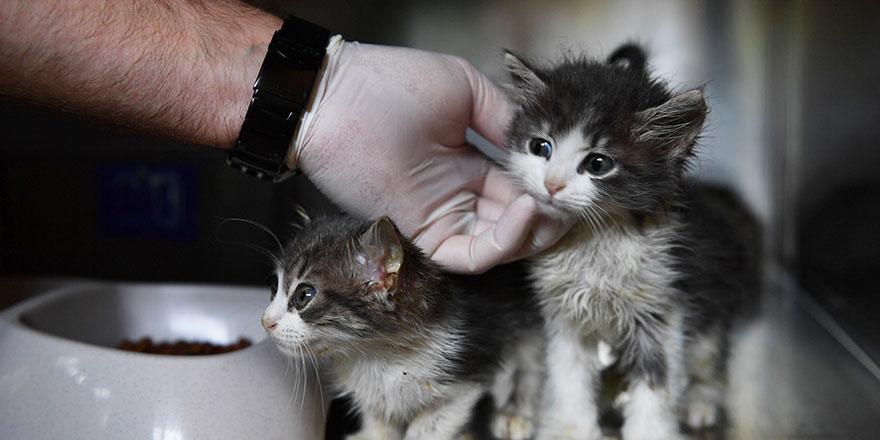 Kedilere özel hastane açıldı