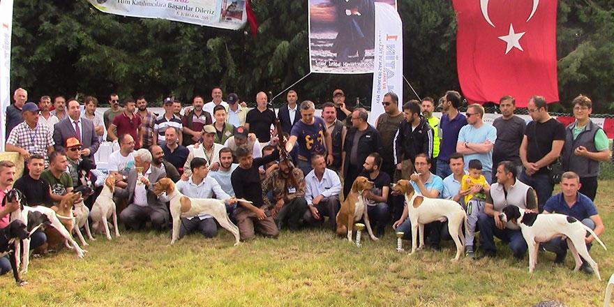 Köpekler yarıştı
