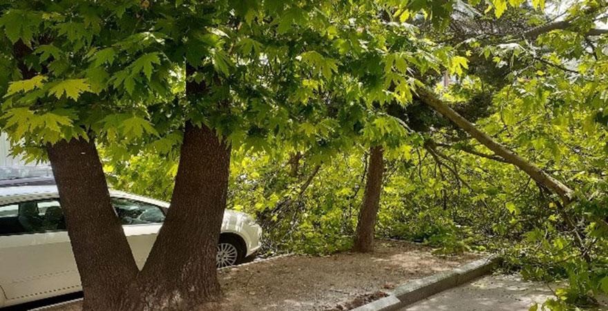 Ankara'da devrilen ağacın altında kalan vatandaş yaralandı