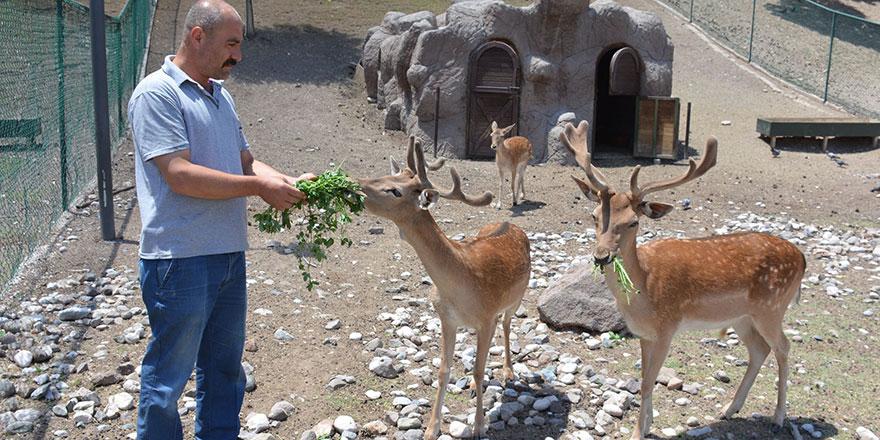 Hayvanat bahçesine yeni dostlar geliyor