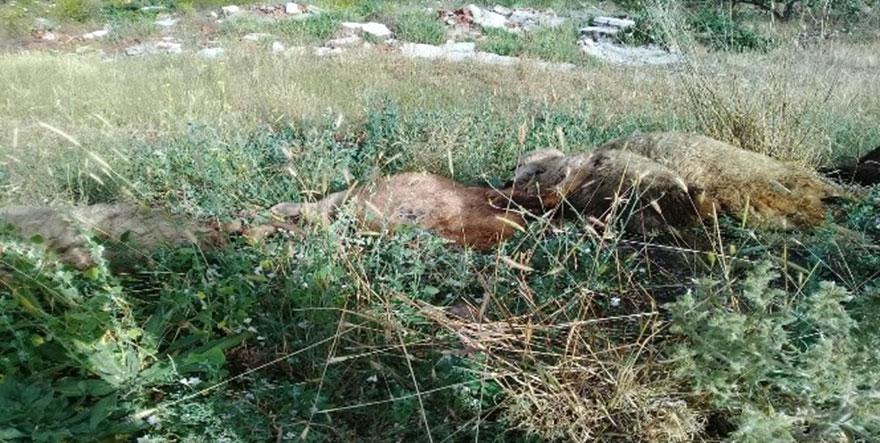Ankara'da 10 koyun telef oldu
