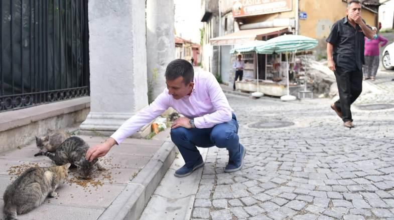 Ankara Kalesi'nin kedilerine sahip çıkıldı