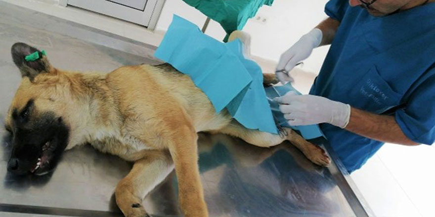 Sokak hayvanlarına şefkat eli uzandı