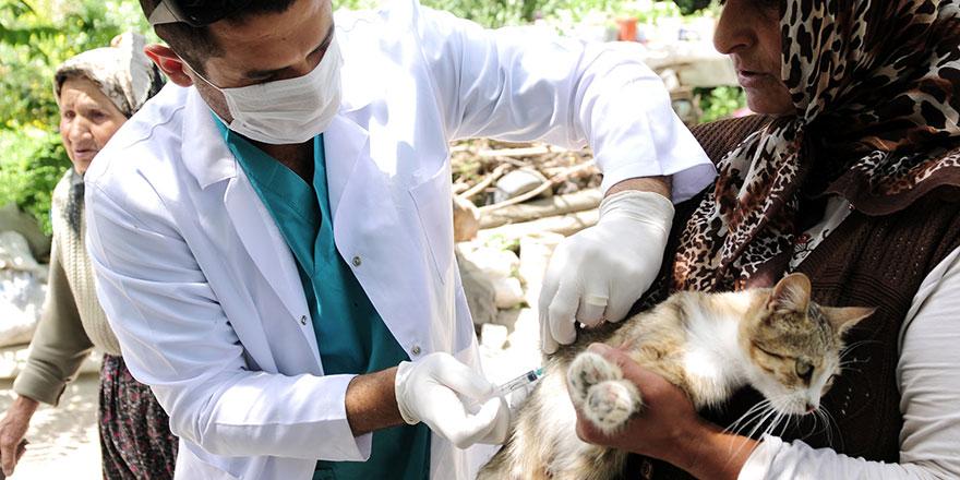 Mamak Belediyesi'nden ücretsiz kuduz aşısı
