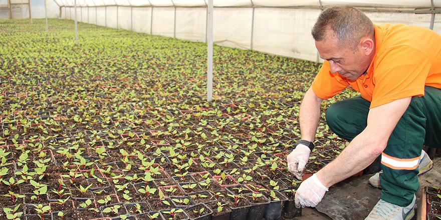Çankaya'da kışlık çiçek çalışması