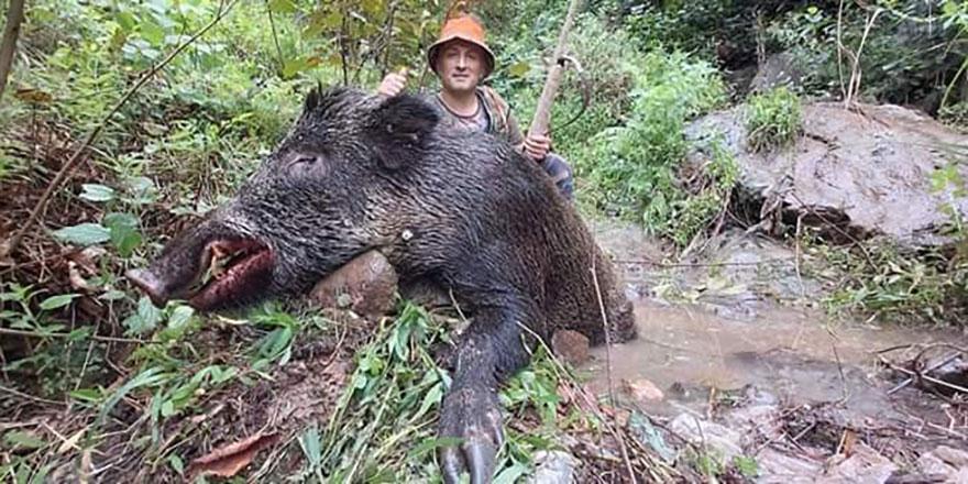 Ordu'da dev domuz vuruldu