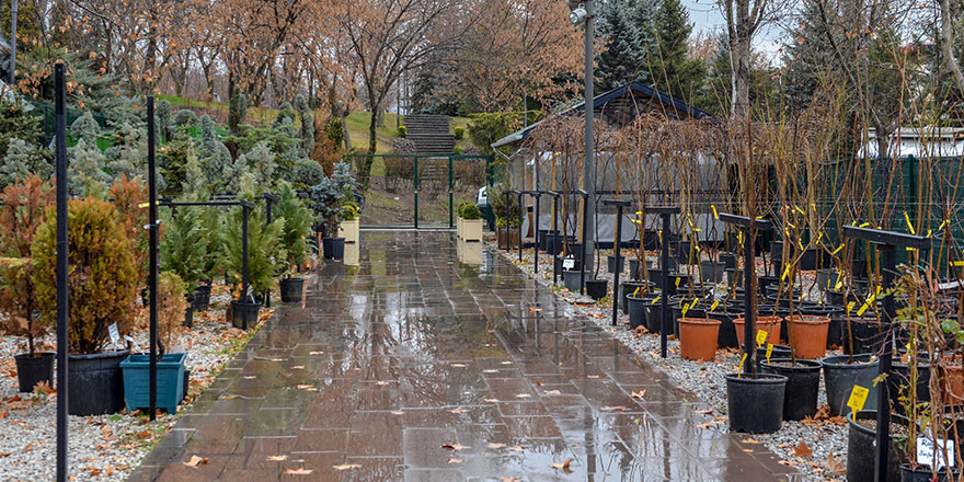 Ankara'da yerli bitki üreticileri kazanacak