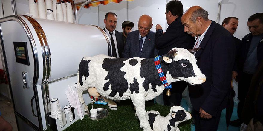 Yenimahalleliler akıllı inekle tanıştı
