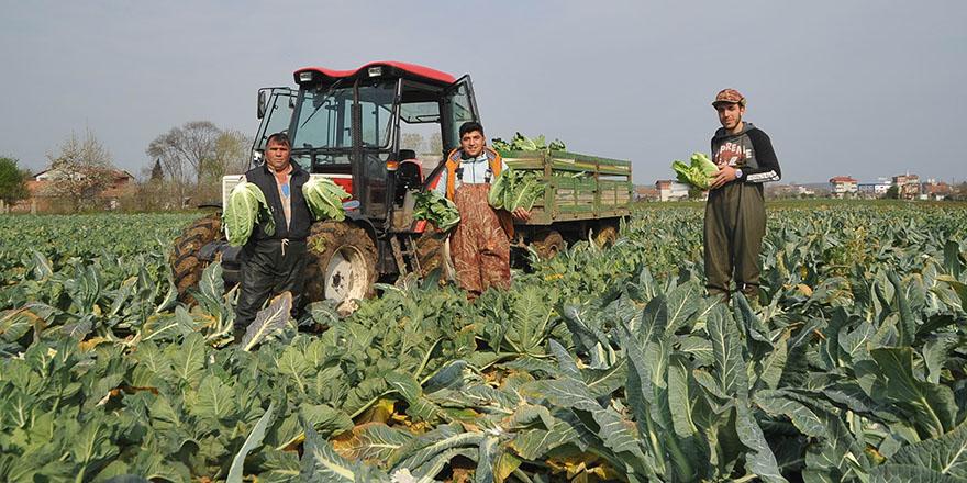 Koronaya inat çiftçiler tarıma devam ediyor
