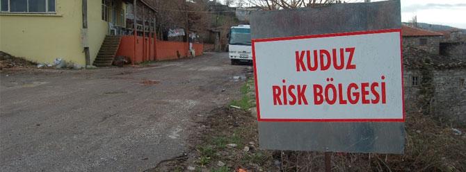 5 mahalle 'kuduz risk bölgesi' ilan edildi