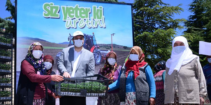 100 bin domates fidesi çiftçilere dağıtıldı