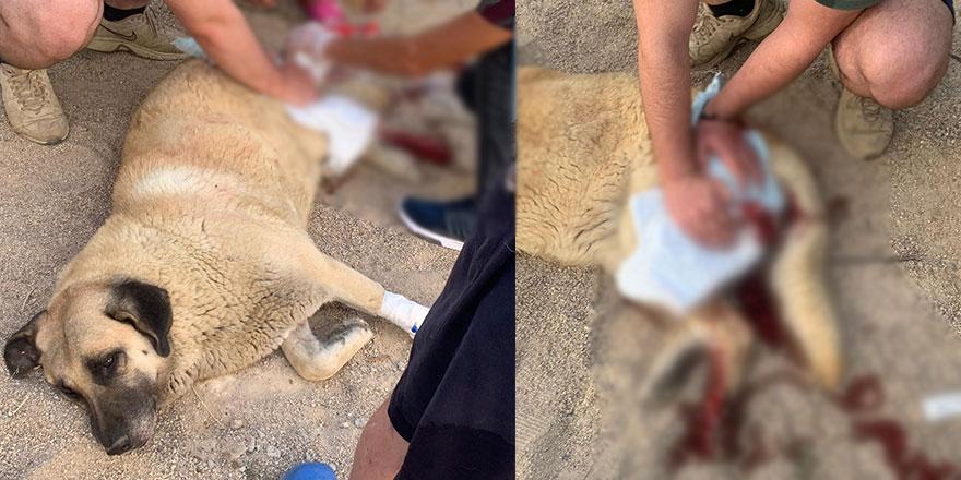 Sokaktaki köpeği bıçaklayan şahıs gözaltına alındı