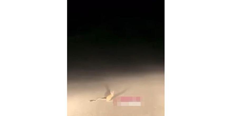 Dünyanın en ilginç hayvanı! Kanguru Faresi Gölbaşı'nda görüldü