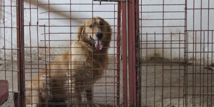 Bayramda köpek otelleri yüzde yüz doldu