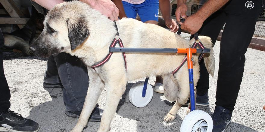 Engelli sokak hayvanlarına yaşam desteği