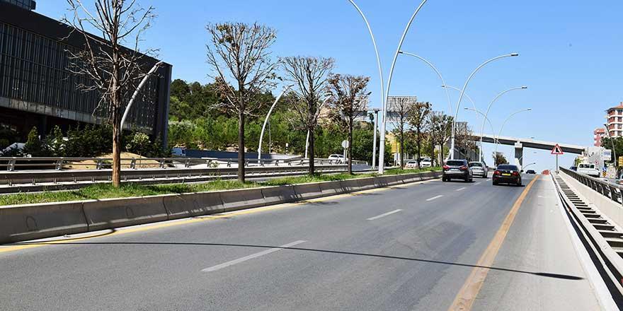Başkent'teki ağaçlar neden kuruyor?