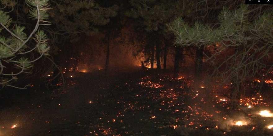 Pursaklar'da ormanlık alanda yangın