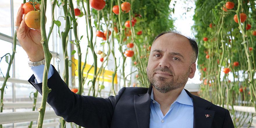 Türkşeker'den sera üretiminde sözleşmeli tarım modeli