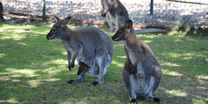 Burası Avustralya değil Keçiören