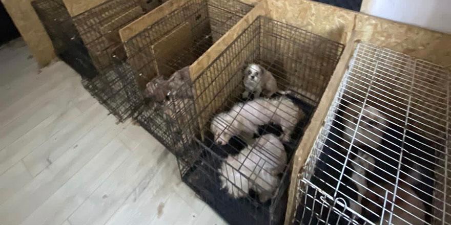 Başkent'te bodrum katında 68 köpek bulundu