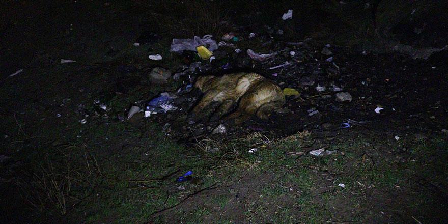 Zehirlendikleri iddia edilen 6 köpek ölüsü bulundu