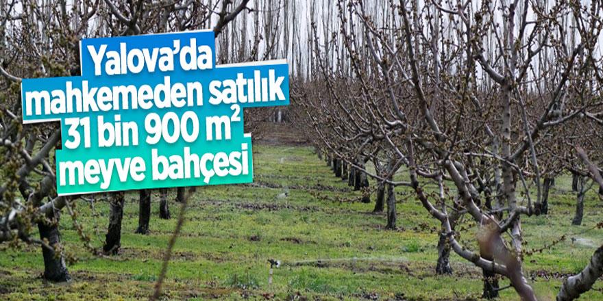Çiflikköy'de mahkemeden satılık meyve bahçesi