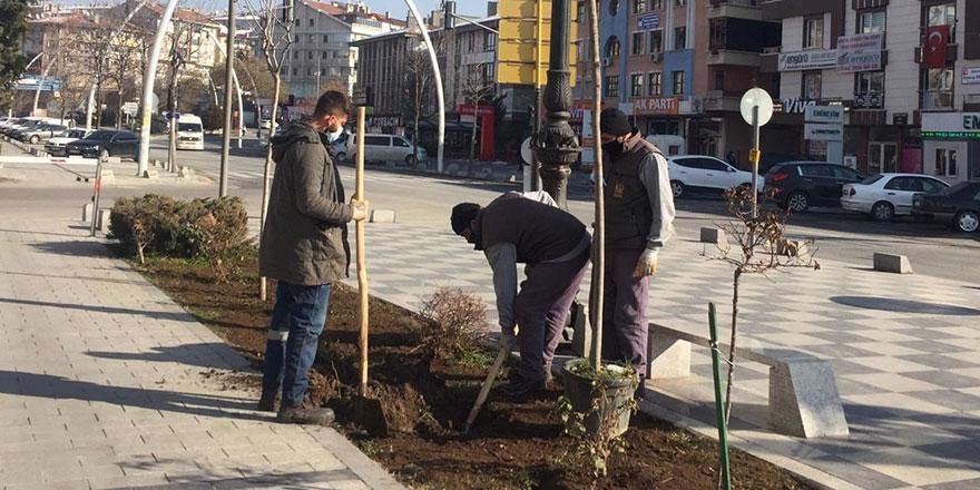 Keçiören her mevsim ağaçlandırılıyor
