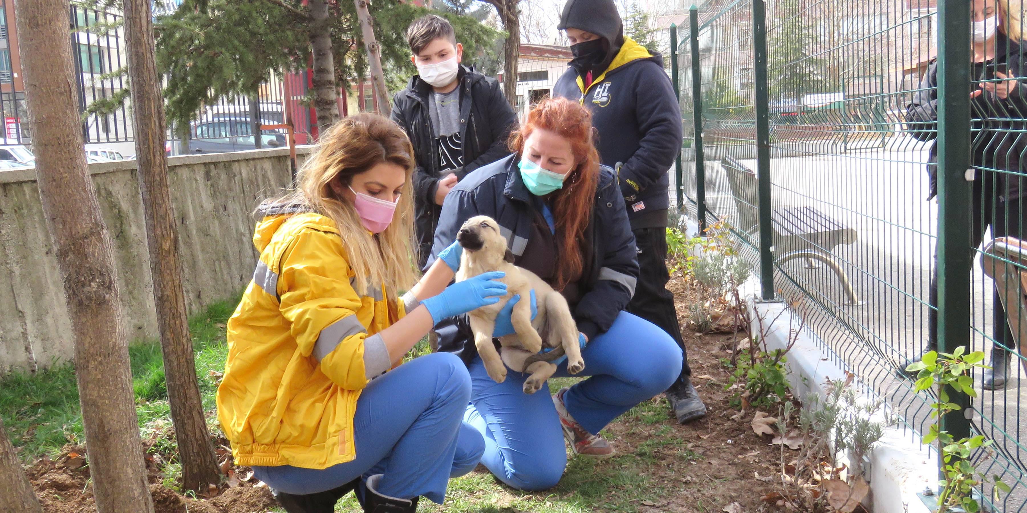 Çankaya Belediyesi sokak hayvanlarını unutmuyor