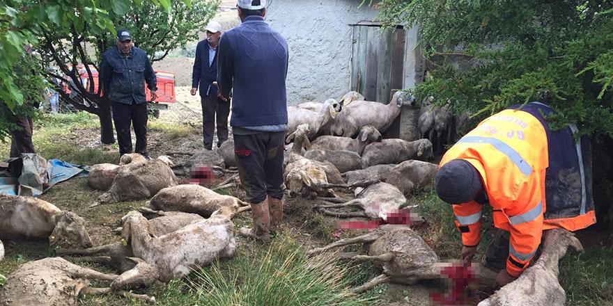 Balalı çiftçinin 70'i aşkın koyunu telef oldu