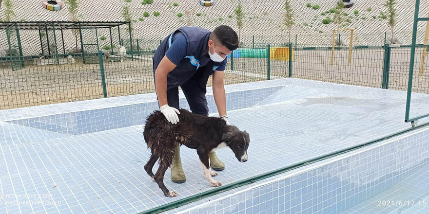 """Sincan'da sokak köpeklerine """"Eğitim Parkuru"""" yapıldı"""