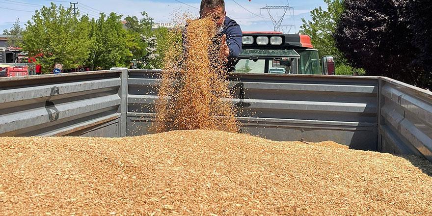 Yılın ilk hasat buğdayı Polatlı'da satıldı