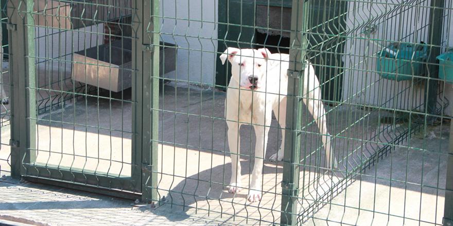 Bu köpekleri beslemenin cezası büyük