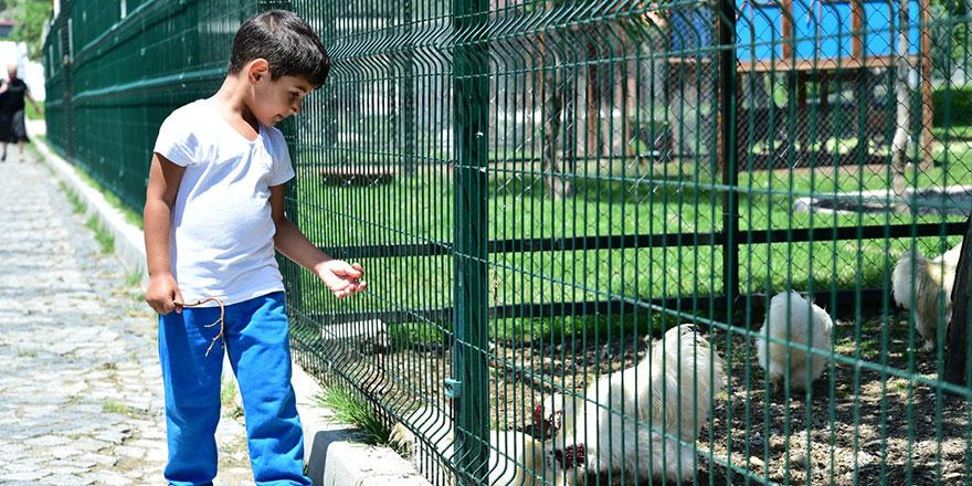 Mini hayvanat bahçesi ilgi odağı oldu