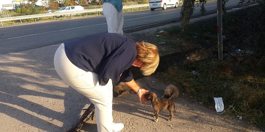 50 yavru köpekten 20'si telef oldu