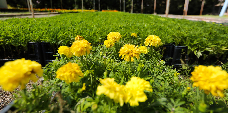 Yenimahalle'de Çiçek Festivali başlıyor