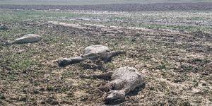 Ankara'da şiddetli yağmur, çobanlar canını zor kurtardı