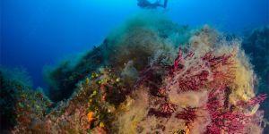 Su altının çiçek bahçesi kızıl mercanlar