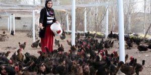 Aldığı hibe desteğiyle organik yumurta çiftliği kurdu