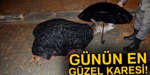 Yaralı eşek ıslanmasın diye şemsiye tuttu