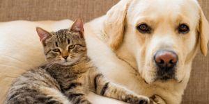 Köpek ve kedilere çip geliyor