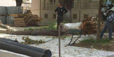 Mudanya'da kesilen ağaçlar ortalığı karıştırdı