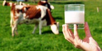 Bir zam da süte geliyor! Üreticiler isyan etti
