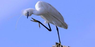 Çok özel sergi! Nallıhan'ın kuşları Başkentlilerle buluşacak