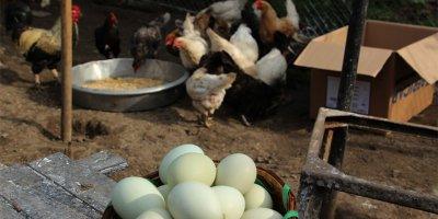 Yumurta ihracatında rekor yükseliş!