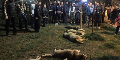Başkent'te köpek katliamı