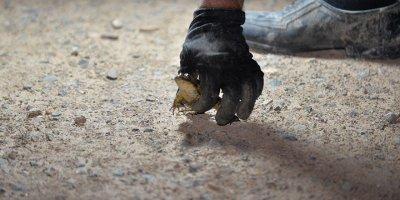 Avcılar gaz lambalarıyla kurbağa avında
