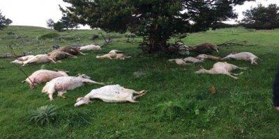 Kızılcahamam'da 24 hayvan telef oldu